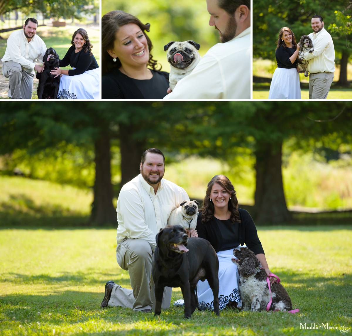 family portraits with dogs