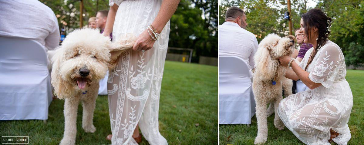 puppy snapshots wedding