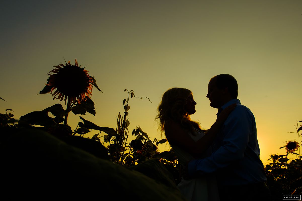 memphis engagement photography sunflower field