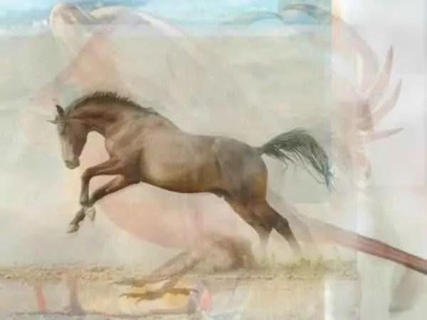 4-28-e1490731212590 | Какое животное вы увидели первым на картинке? Тест на характер
