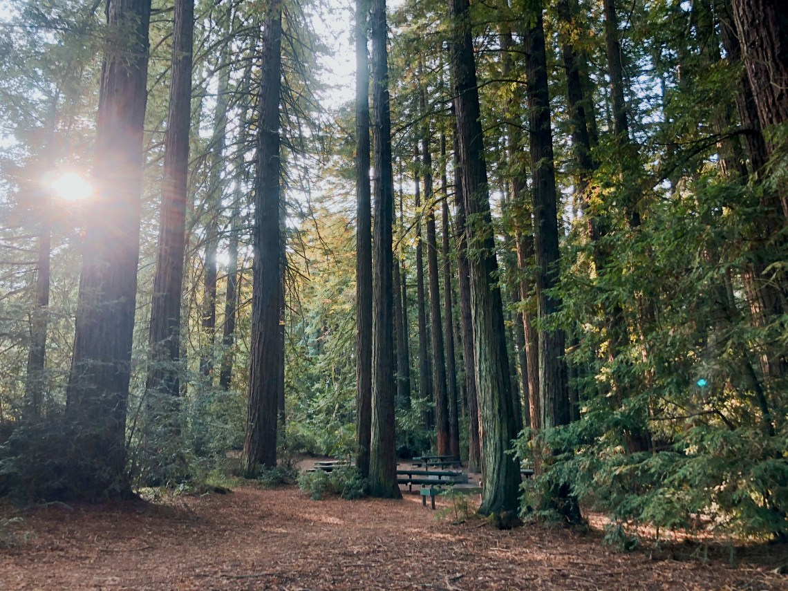 Respite in the Redwoods