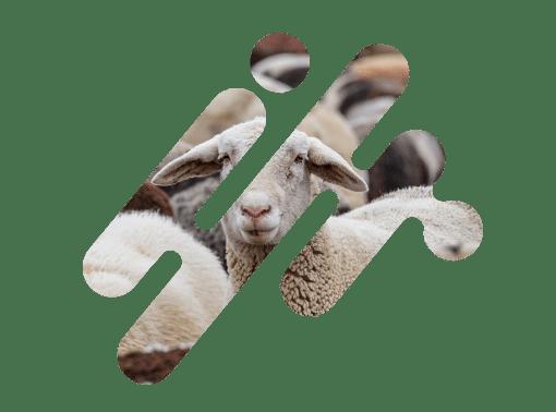 International Livestock Registry – Logo Mask