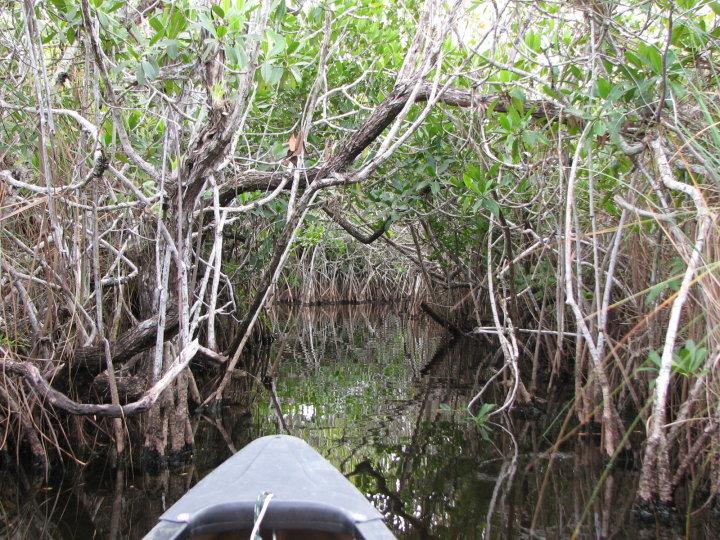 Paddeling the Nine Mile Pond Canoe Trail
