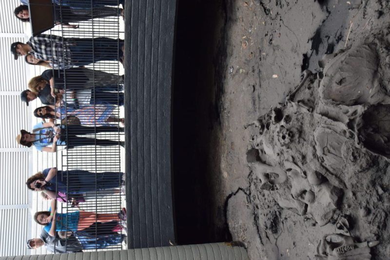 Getting stuck exploring Los Angeles's La Brea Tar Pits