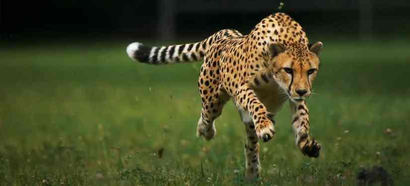 ciri ciri makhluk hidup : Bergerak