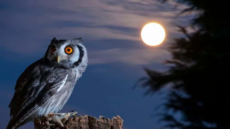 Mitos Terkait Burung Hantu