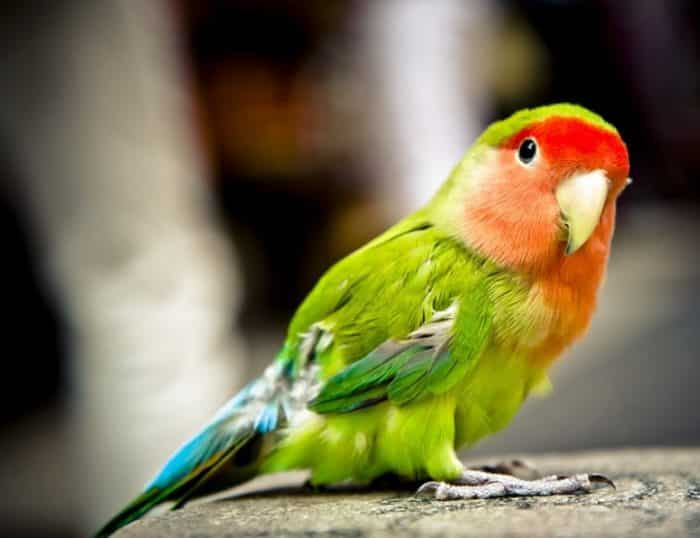 Perawatan Kandang Burung Beo