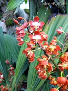 orchidea_kew_gardens_londra