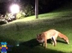 things-to-see-goodbye-london-kate-alinari-fox