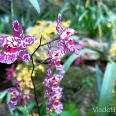 orchidea_serra_londra