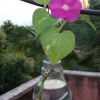 DIY - Old light bulb vase