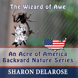 wizard Of Awe book cover