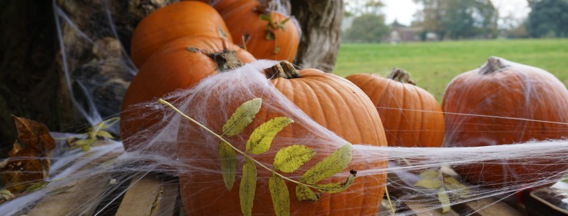 Halloween activities 2020 - pumpkins covered in spiderwebs