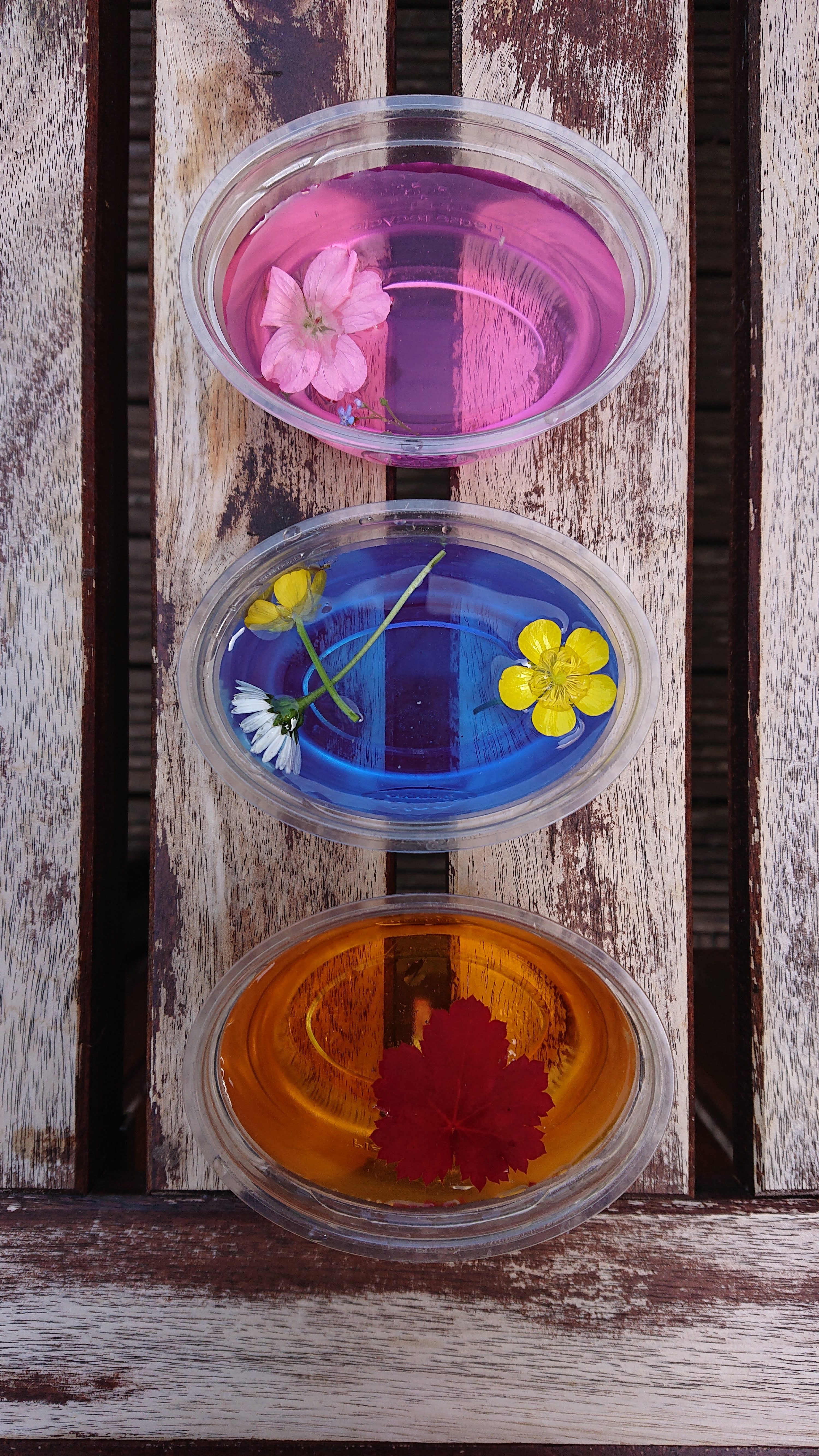 Easy summer crafts for kids. 3 yoghurt pots filled with coloured water and flowers ready for freezing