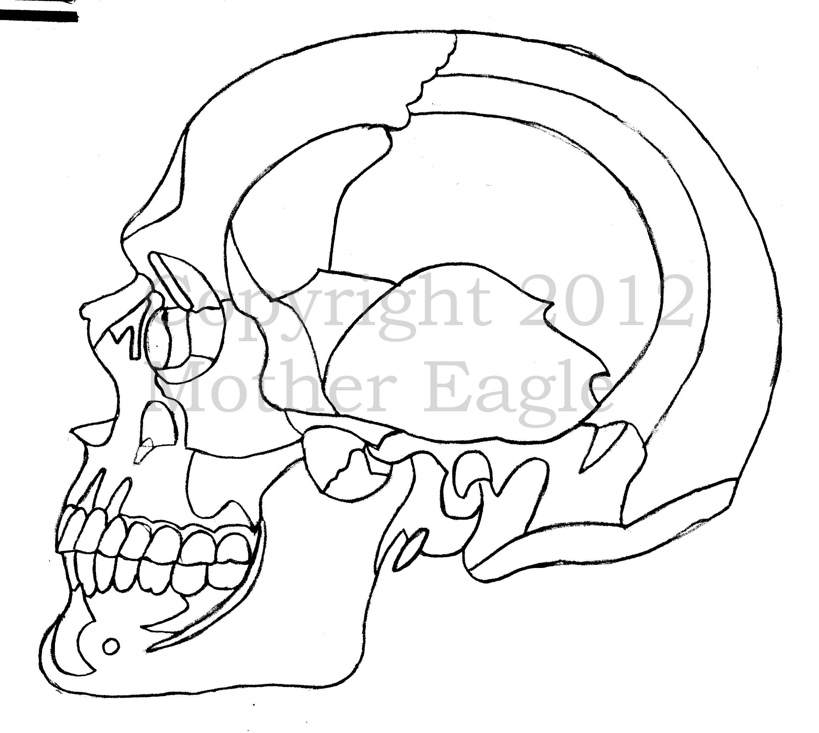 Skull Outline Pictures To Pin