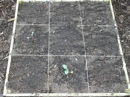 Box 1, straight after planting