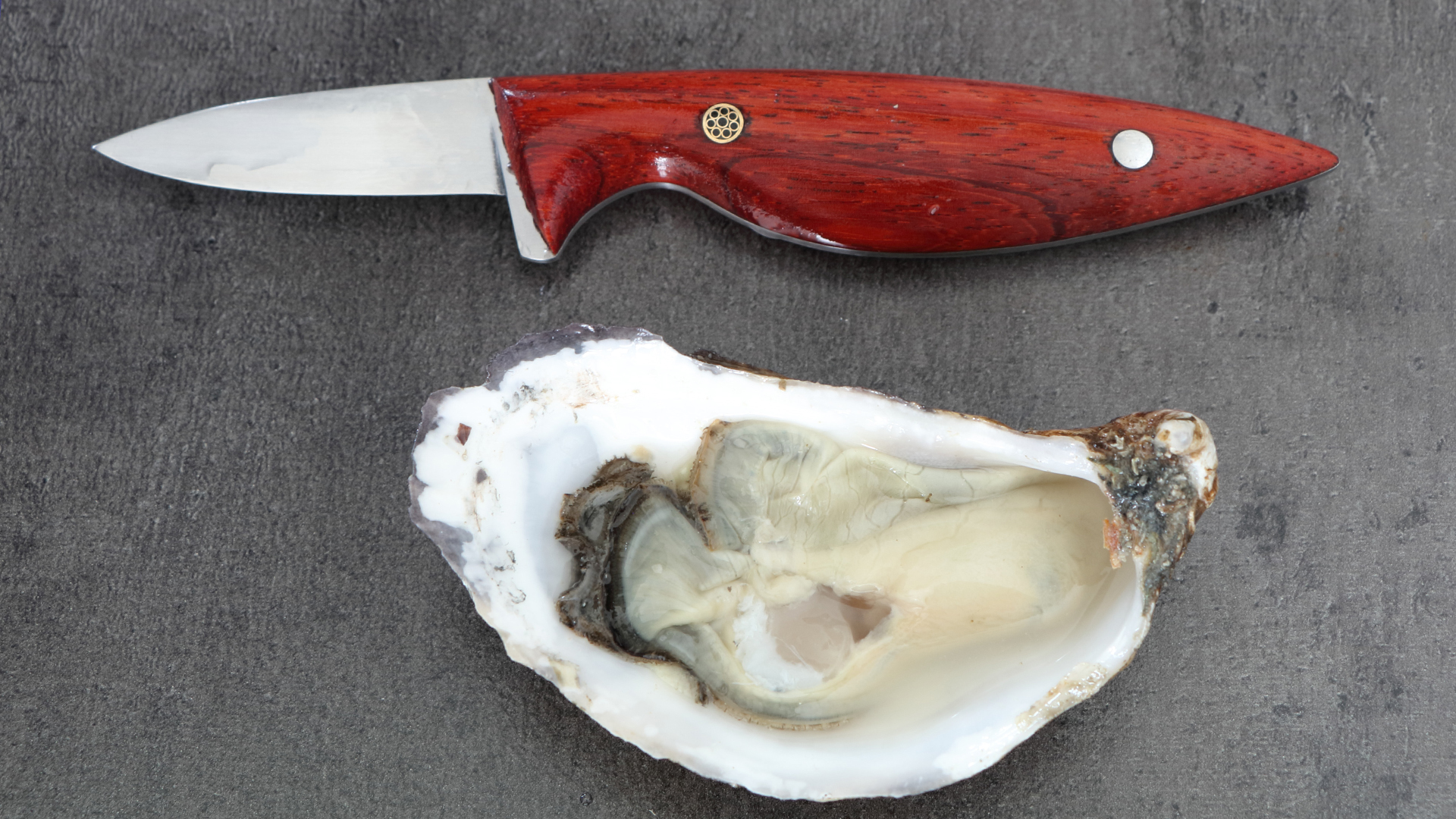 This oyster knife is perfect as a gift for oyster lovers!