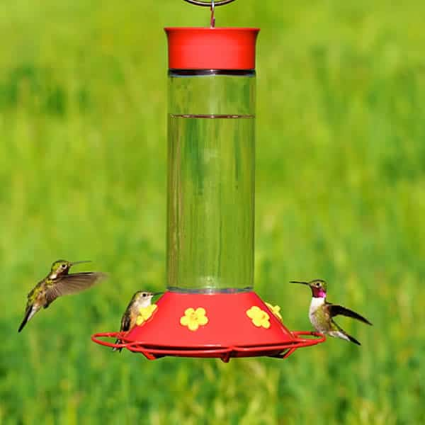 Try making homemade hummingbird food made in a pinch forumfinder Choice Image