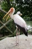 Oiseau Bird Park Kuala Lumpur