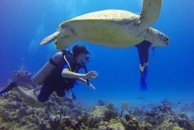 Plongée adolescent et tortue