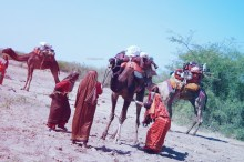 Jat women loading their camels before starting off.