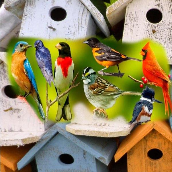 Assorted Birds 1