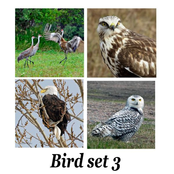 bird set 3 for tiles coasters