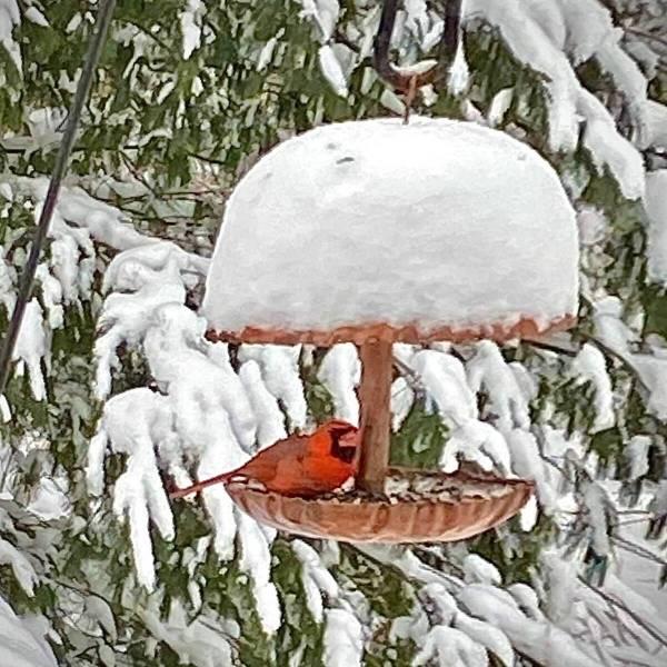 Browersmith Copperworks Bird Feeder