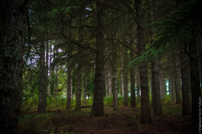 Promenons nous dans bois...