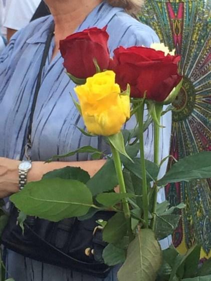 Les roses aux couleurs catalanes et espagnoles