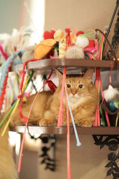 Image d'illustration - Dans les bars à chats de nombreux jouets sont à disposition des clients