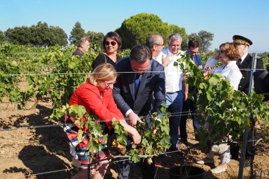 Romain Grau et Hermeline Malherbe cueillent du raisin