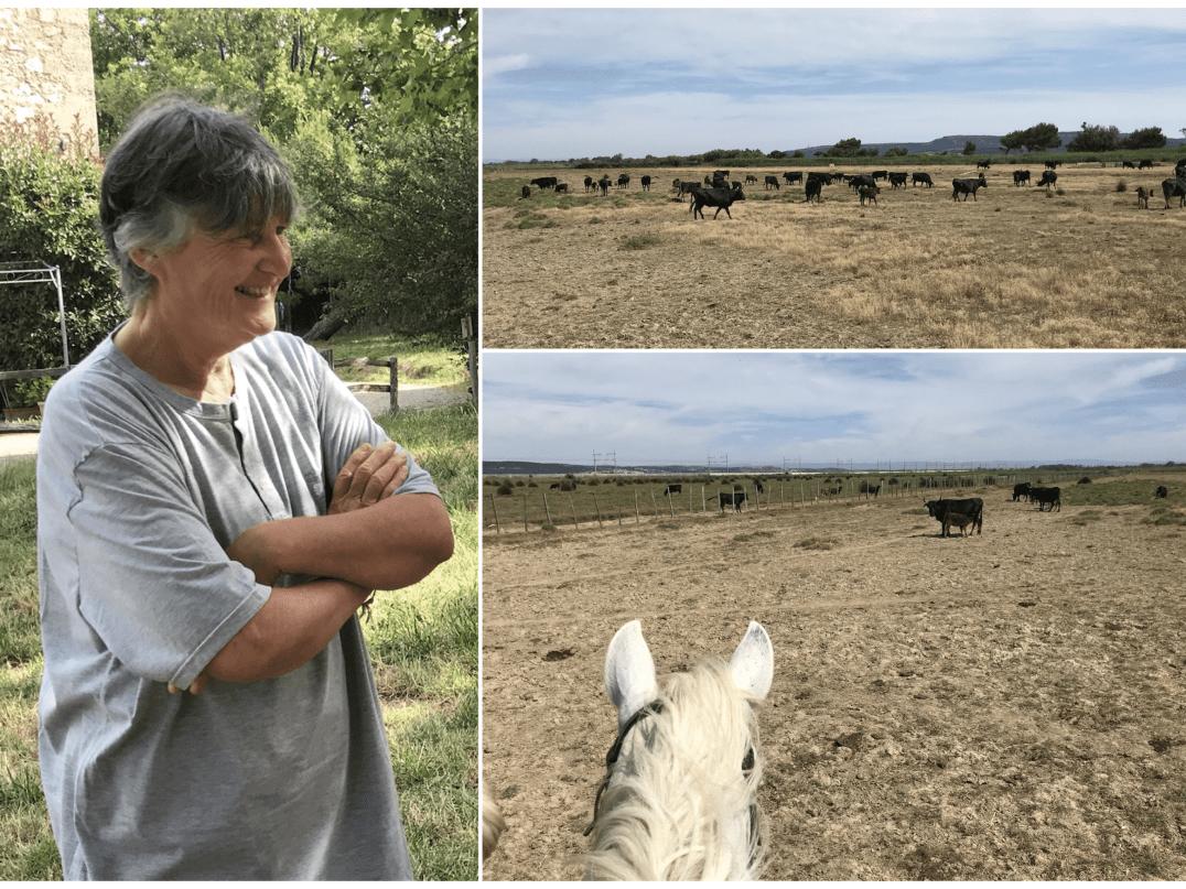 manade-tournebelle-et-son-élevage-de-taureaux-aude