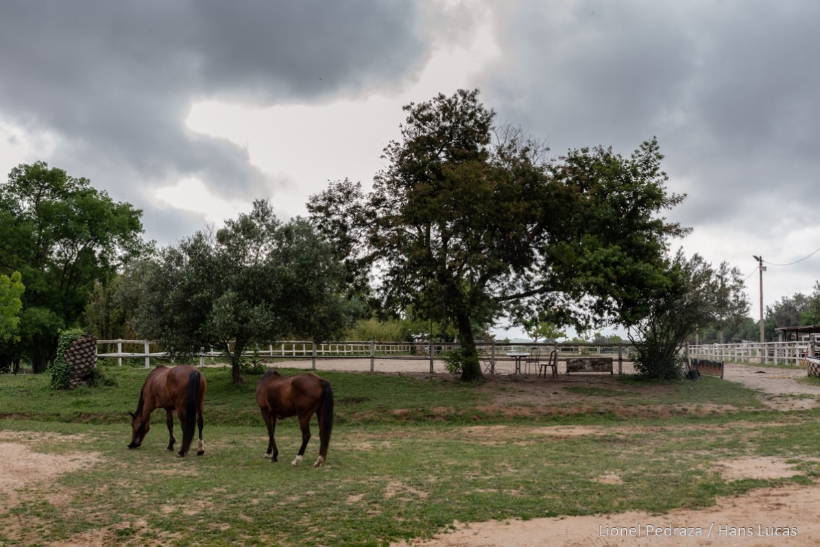 Villeneuve de la Raho, April 17, 2020, equestrian center. Close to the public since March 17, 2020 following the containment established during the COVID19 pandemic. the horses take advantage of the situation to move freely outside the paddocks. Villeneuve de la raho, 17 avril 2020, centre equestre. Fermer aux public depuis le 17 mars 2020 suite aux confinement instaure lors de la pandemie du COVID19. les chevaux profite de la situation pour circuler librement en dehors des paddocks.