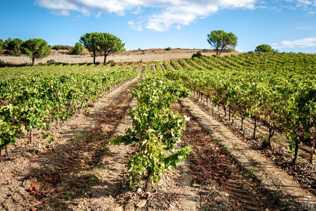 28/09/2019, Estagel, France, Illustration vigne vin secteur viticole vinicole Fenouillèdes © Arnaud Le Vu / MiP / APM