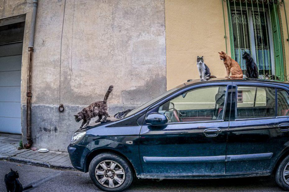 Animaux - chats © Idhir Baha
