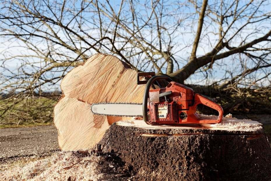 Quand l'abattage d'arbres anciens scie les riverains