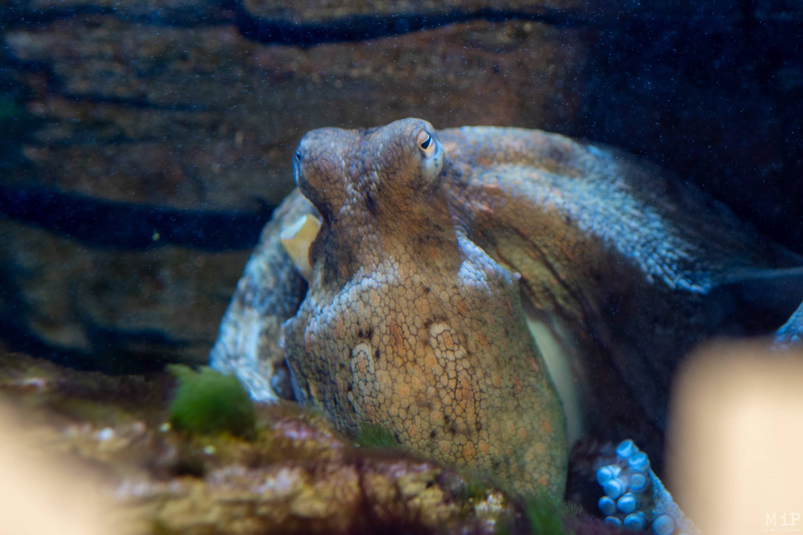 Oniria - Aquarium de Canet-en-Roussillon © Arnaud Le Vu / MiP / HL
