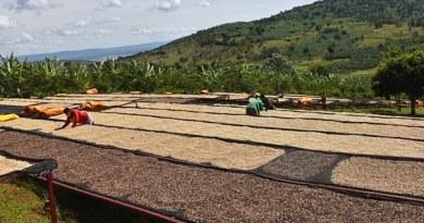 Mpanga koffie van Jumbo draagt bij aan beter bestaan voor boeren in Rwanda