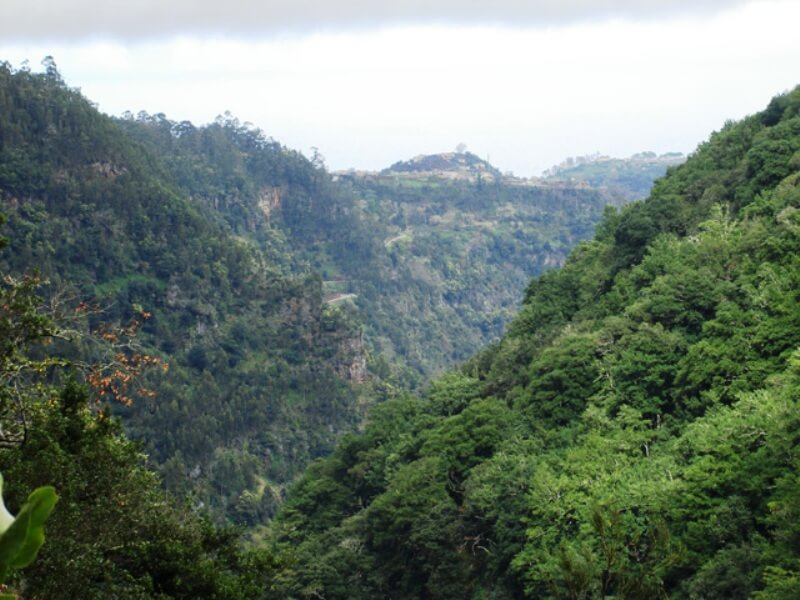 King's Levada Walk (Medicinal herbs) and Northeast views in Madeira (4)