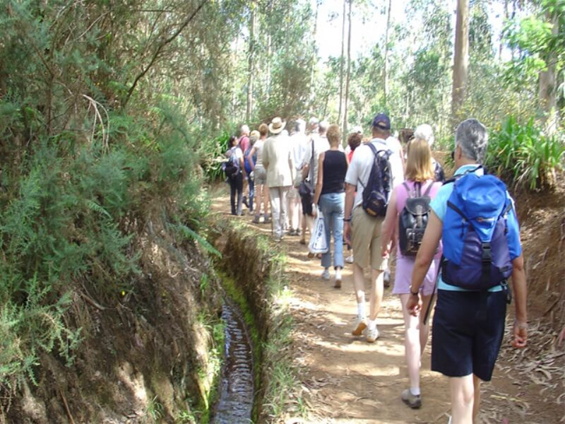 Paradise Valley Levada Walk in Madeira (8)