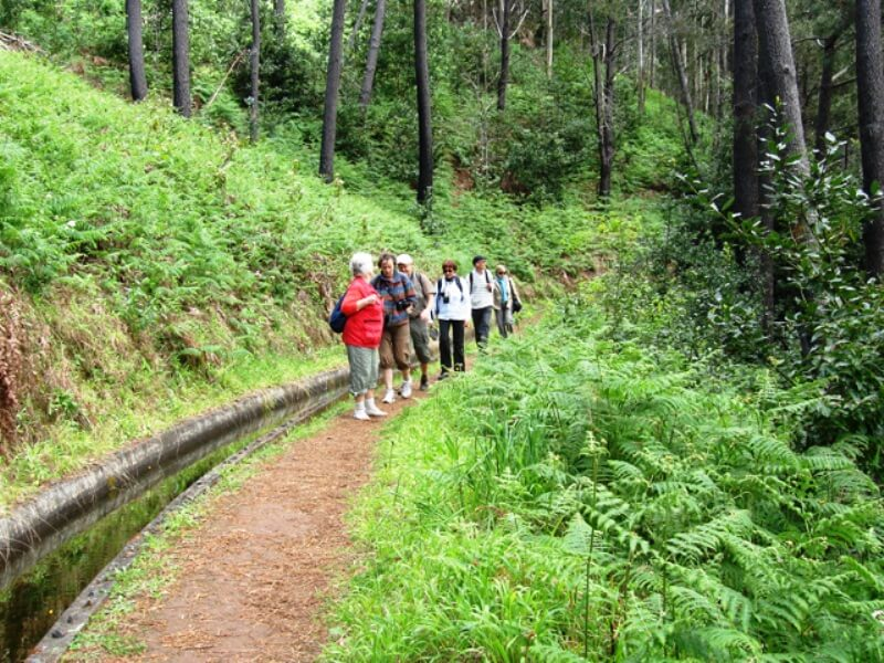 Prazeres to Ponta do Pargo Levada Walk in Madeira (6)