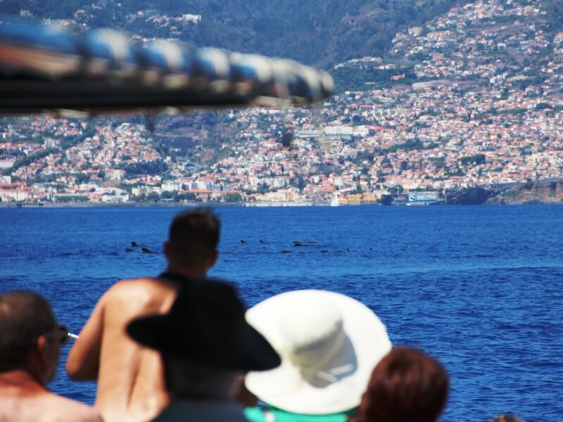 Dolphin & Whale Watching in Madeira Island (2)
