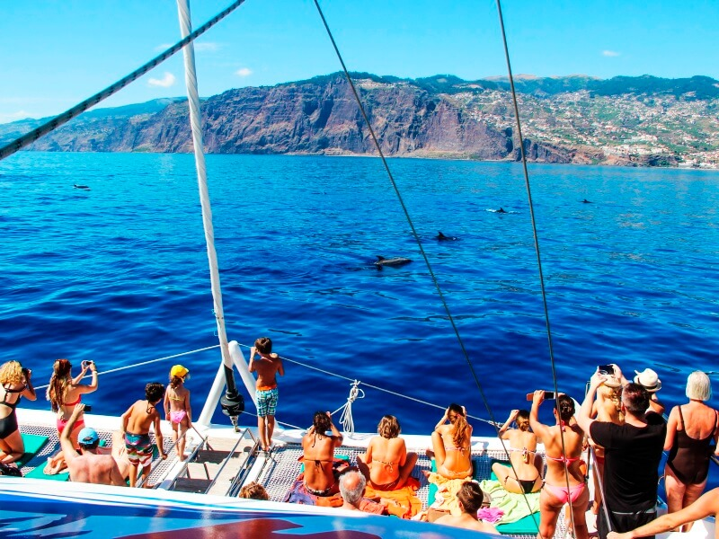 Dolphin & Whale Watching in Madeira Island (4)