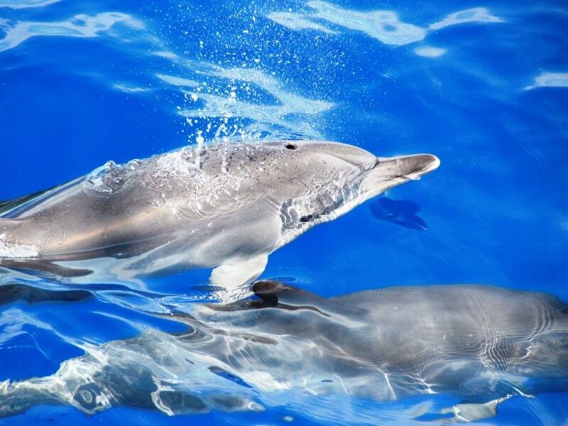 Dolphin & Whale Watching in Madeira Island (8)