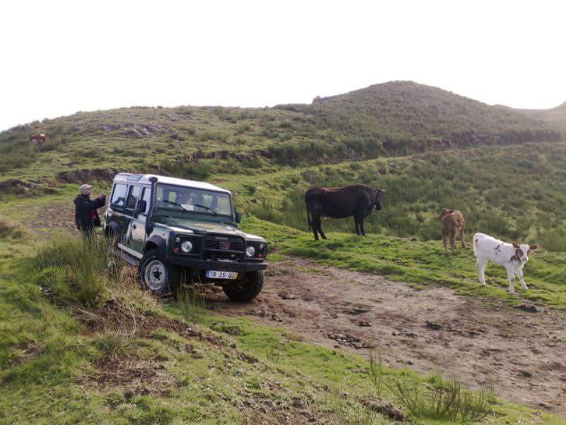 Jeep Safaris in Madeira Island (15)