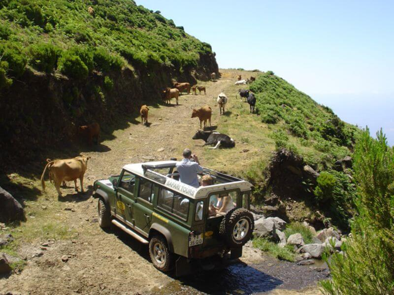 Jeep Safari East Half Day Tour