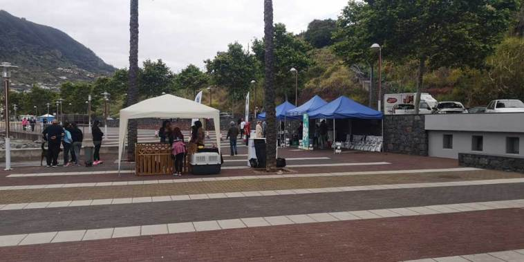 Ambiente Dog Trail Machico 2019