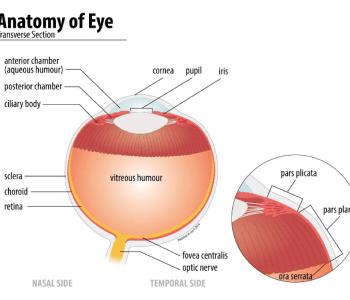 Anatomy of Eye