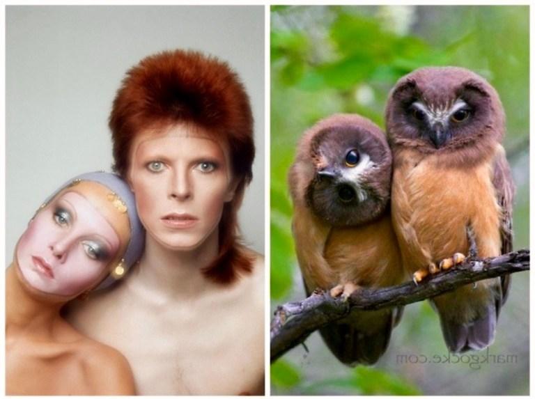 Bowie-OwlsPinUps